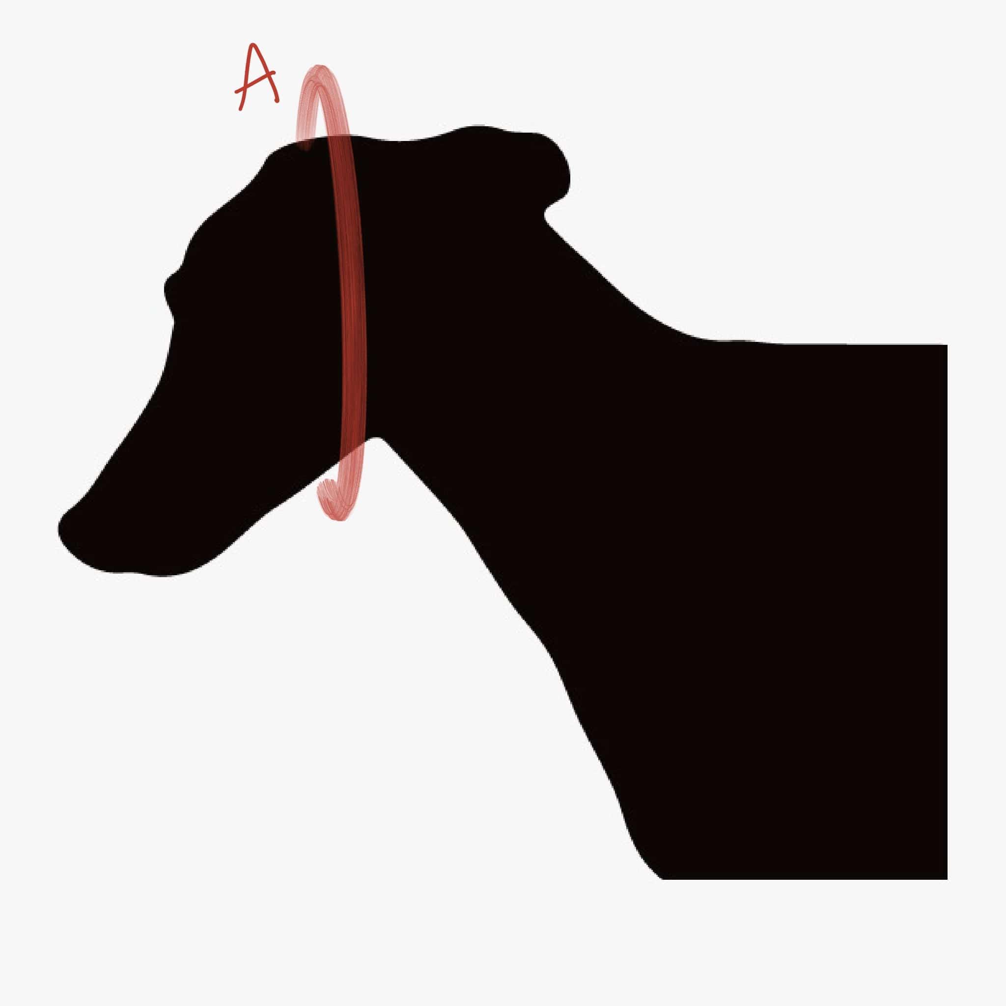 Haciendo el galgo - medidas bandana perro