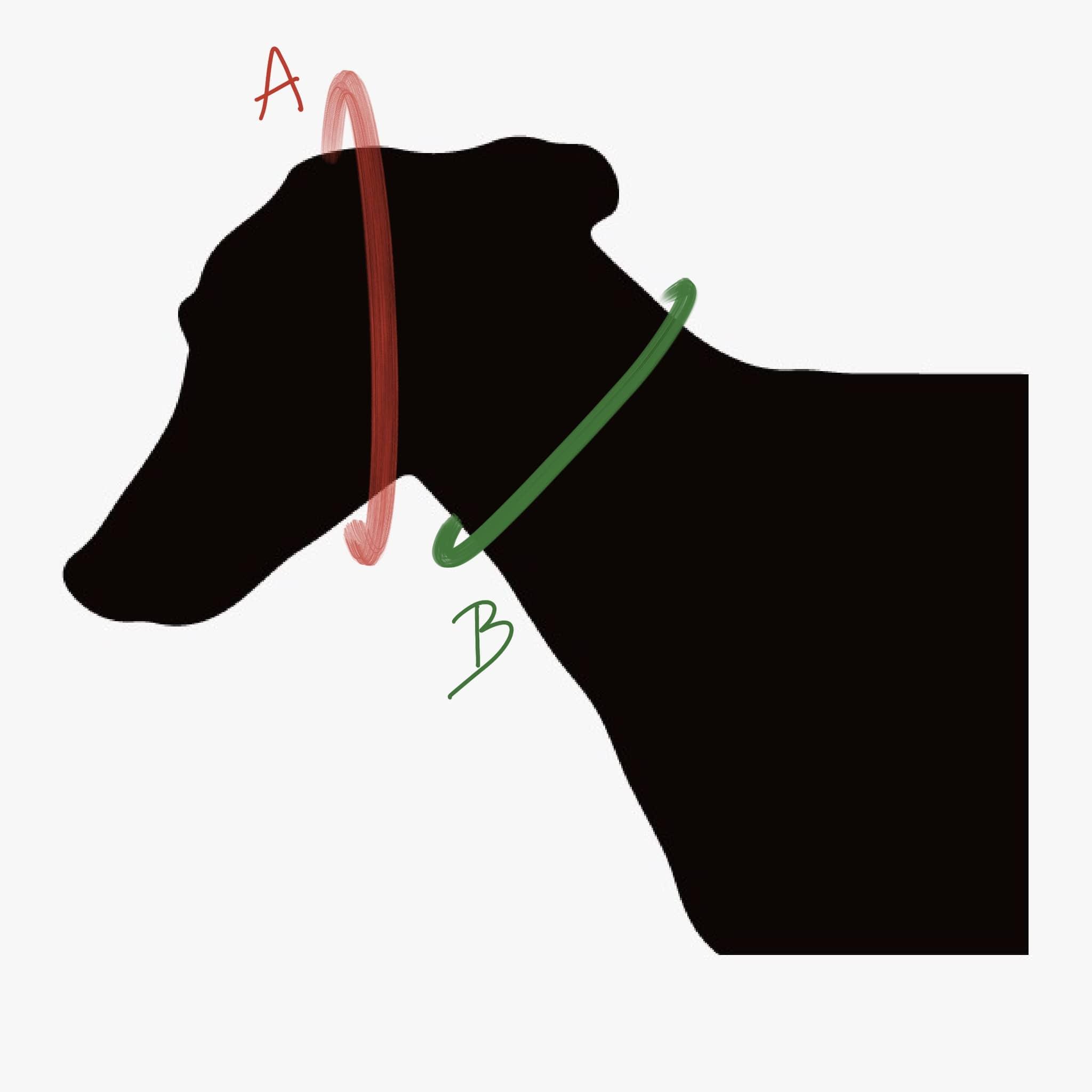 Haciendo el galgo - medidas collar perro